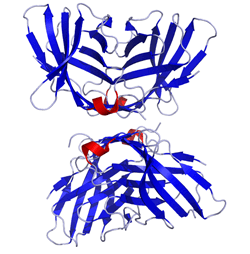 CTLA4_Crystal_Structure.rsh